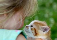 Psihologs izskaitļo ko nozīmē ja cilvēks ļoti mīl kaķus. Psihologi apgalvo, ka tas ir nopietns iemesls aizdomāties