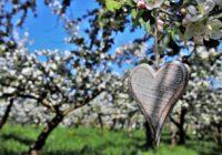 No šīm lietām ir obligāti jāatbrīvojas līdz pavasarim, lai tas būtu ražīgs un panākumiem bagāts