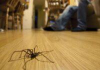 Lai arī cik tev būtu bail, bet nedrīkst nospiest zirnekli mājās, pretējā gadījumā var sanākt bēdīgi