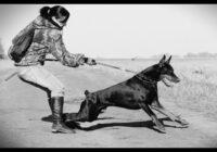 4 iemesli, kāpēc suns velk pavadu un kā to mainīt. Padomi no suņu skolas
