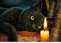 Kāpēc nedrīkst ilgi skatīties kaķim acīs? Tevī var iemiesoties dēmons!