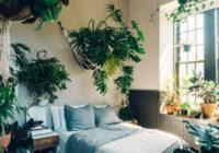 TOP 10 augi, kas ne tikai rotā mājokli, bet arī uzlabo mājinieku veselību. Tie izdala skābekli pat naktī!