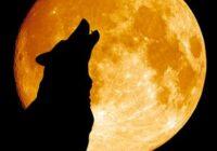 Astrologi nosauca dažas zodiaka zīmes, kurām 7.maijā (šodien) pilnmēness atnesīs neizsakāmu laimi un visi strīdi beidzot beigsies