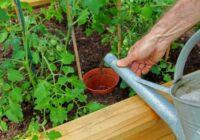 Augu laistīšana karstā laikā. Kā nepieļaut kļūdas, kas var sabojāt ražu. Šī viena kļūda var sabojāt pilnīgi visu!