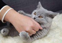 Kaķis brīdina saimniekus, ka dzīvoklī kaut kas nav kārtībā. Ak, šie murrātāji – viņu intelekts vienkārši fascinē!