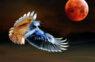 5.jūlijā gaidāms mēness aptumsums. Grūts periods ir gaidāms šīm 4 zodiaka zīmēm