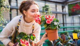Ļoti skaisti istabas augi, kuri patiesībā slepenībā indē jūsu mājokli un līdz ar to apdraud jūsu veselību