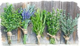 Kādi augi var piesaistīt veiksmi, aizsargāt tavu māju un atrisināt dzīves problēmas. Lūk, labākās metodes to izmantošanai!