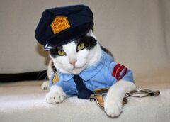 Šī kaķa priekšā pat policijas priekšnieki noņēma cepures un salutēja. Kad izlasīju ko viņš paveica, biju mēma