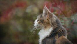 Kaķis – svēts dzīvnieks. Tomēr ir viena lieta, ko ar kaķi nevajadzētu darīt, lai nesaniknotu Visvareno visu kaķu aizstāvi – Sfinksu