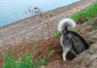 Cilvēki nesaprata kāpēc suns rok bedri, bet kad paskatījās iekšā saimnieks zaudēja runas spējas